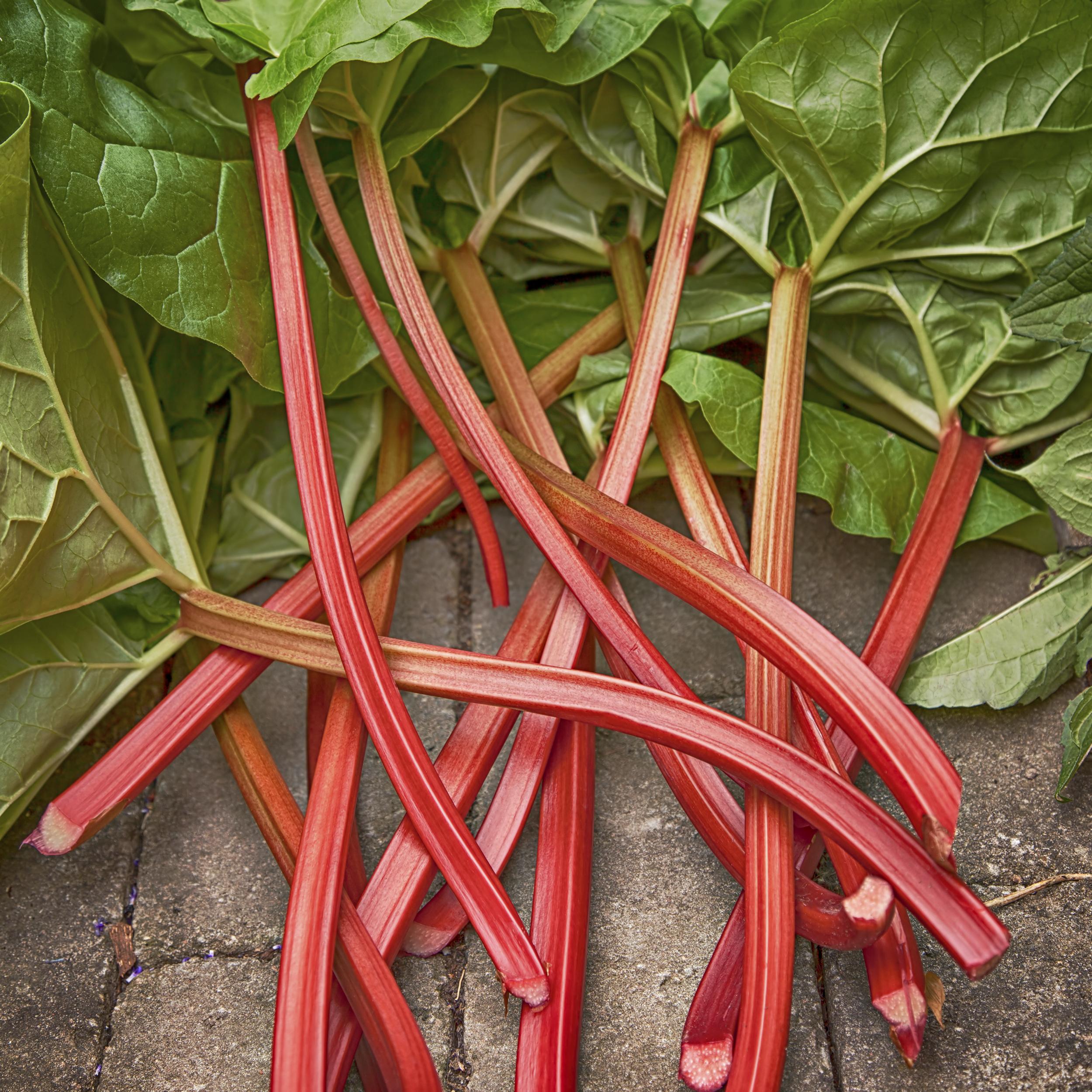 Rhubarb stocks and leaves