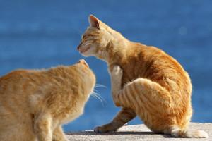 Cats scratching